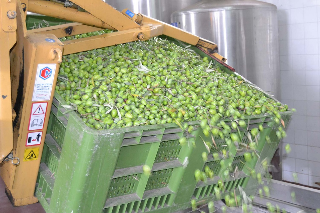 Carmelo_Olive_Oil_Production_1500x1000