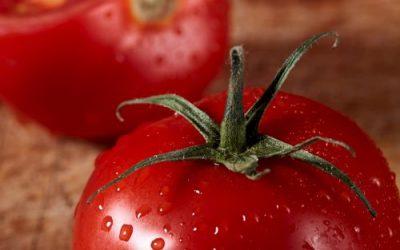 Lentil Stuffed Tomatoes