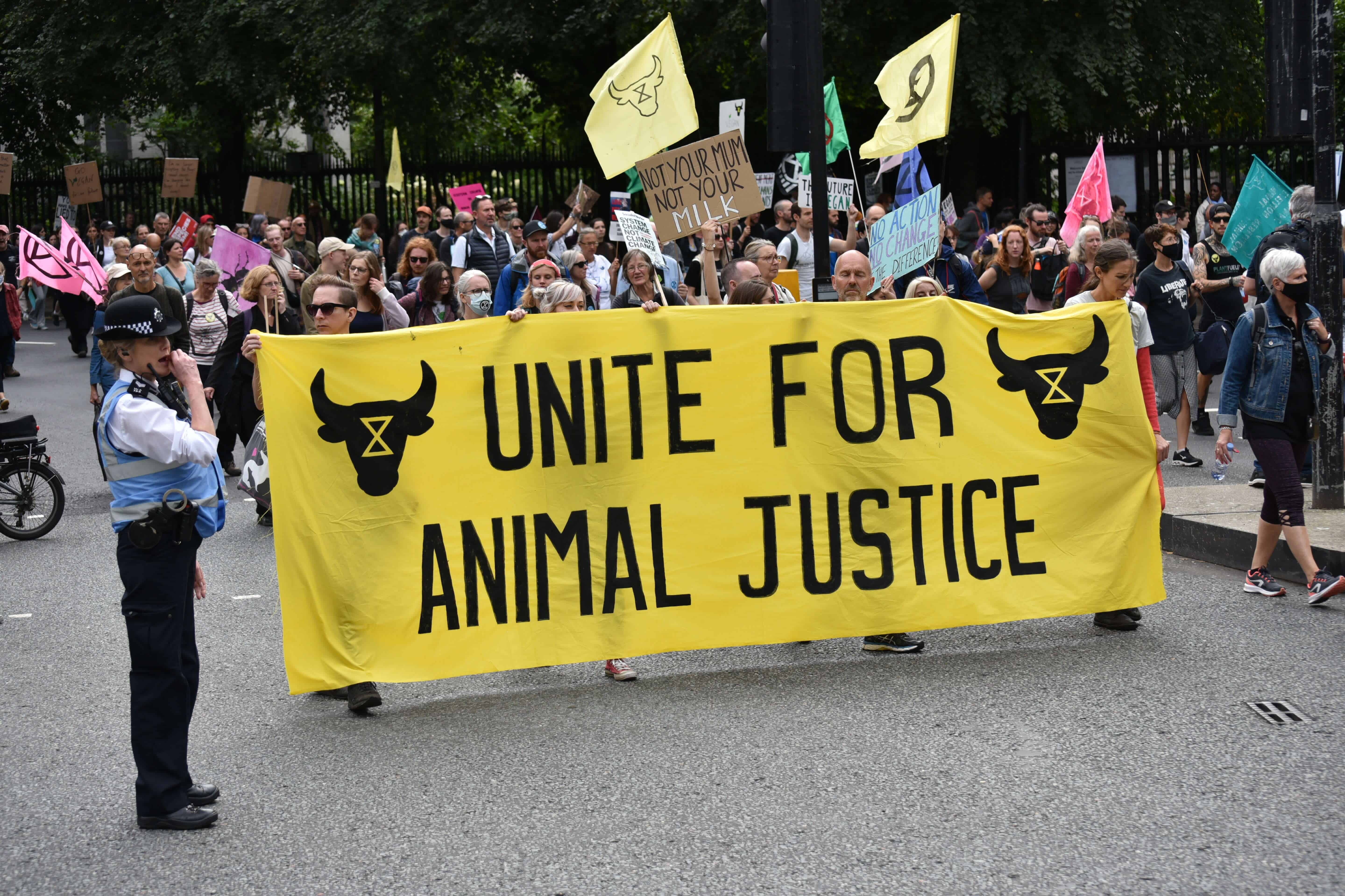 Animal Rights Activists will today come together for the National Animal Rights March, in London